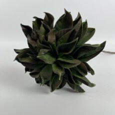 Blüte dunkelgrün